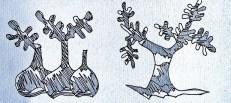 Higos e higueras