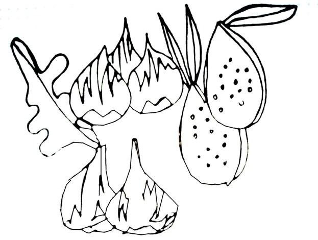 Los higos verdes engordan
